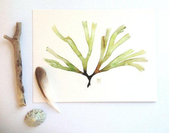 Botanical illustration  Green Seaweed art  by SandraOvono on Etsy