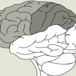 How Writing Affects the Brain