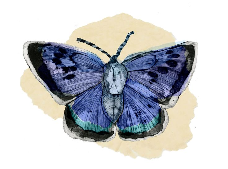 Collagraph | Animal | Butterfly | Caroline Young Illustration