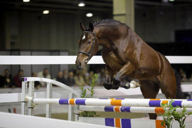 #horse Salto in libertà