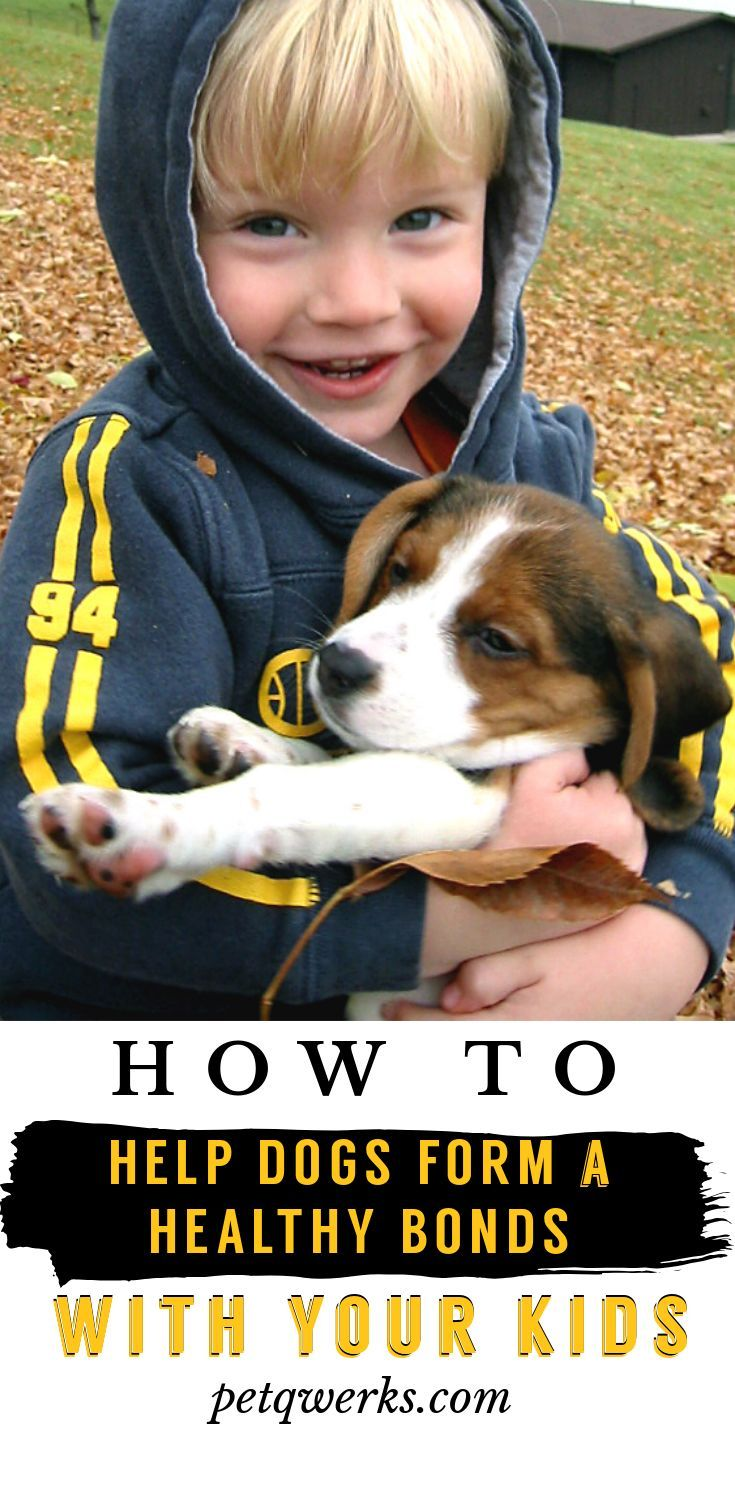 How To Help Dogs Form A Healthy Bond With Your Kids Pet Qwerks Toys Animals For Kids Dog Toys Cuddly Animals