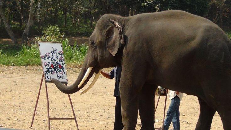 http://bestpictureblog.com/20-amazing-facts-about-elephants/20/ 20 Amazing Facts About Elephants | Best Picture Blog | Page 20