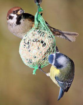 Participer Oiseaux Des Jardins