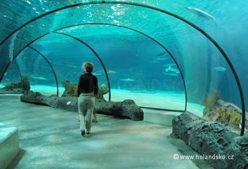 Holandsko, Nizozemsko, inspirace, tipy a turistické info - Zoologické zahrady