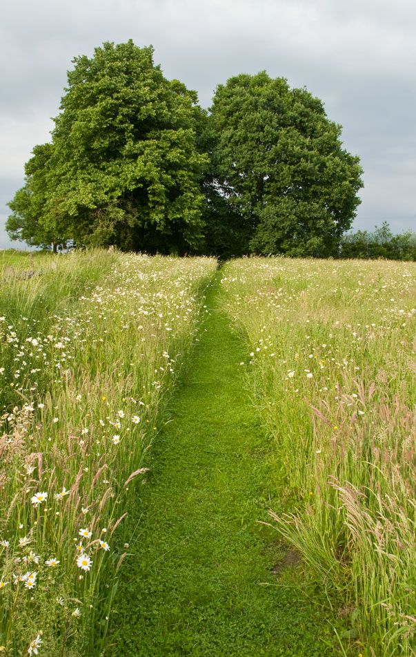 Wild flower meadow in Surrey by Acres Wild. www.acreswild.co.uk