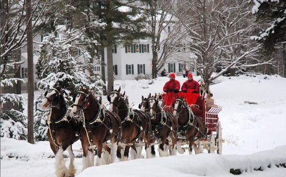 anheuser busch clydesdales happy holidays pinterest