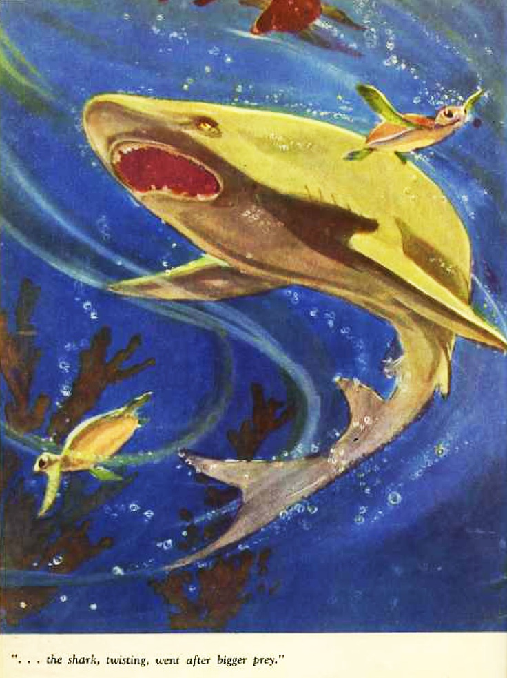 ☞ shark from The story of SARLI the Barrier Reef turtle. Written by Leslie Rees. Illustrated by Walter Cunningham