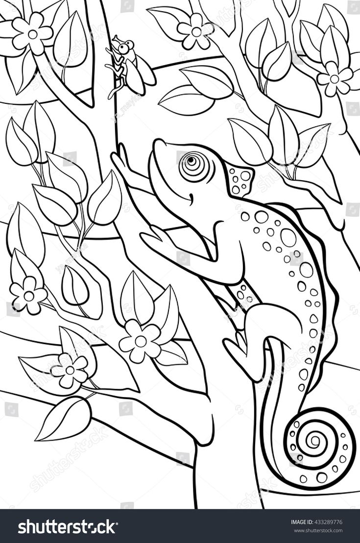 Coloring pages. Wild animals. Little cute chameleon sits