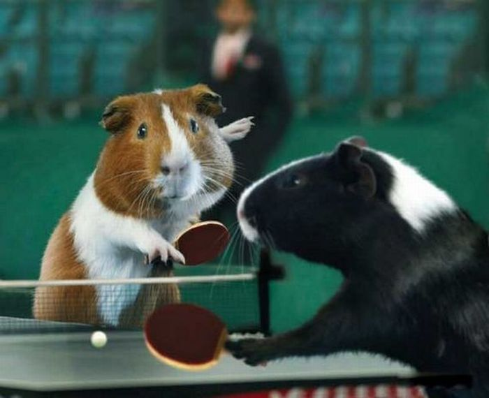 Ping pong event hamsters!
