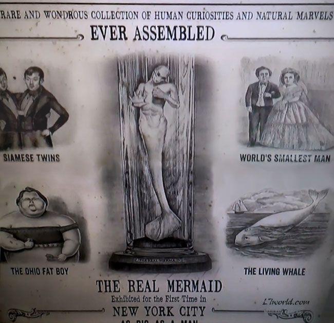 mermaids new evidence 2013 | ... Barnum Real Mermaid Flyer (Animal Planet - Mermaids The New Evidence