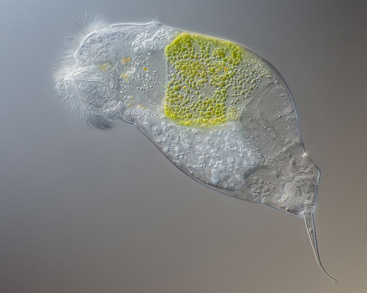 www.photomacrography.net :: View topic - Three Different Organisms