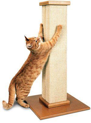 Como evitar que el gato arañe los muebles