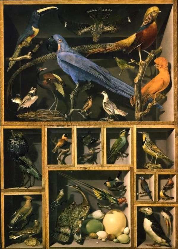 /\ /\ . Still-Life of Exotic Birds by Viscount Alexandre-Isadore Leroy de Barde, circa 1803