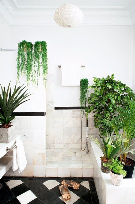 Badkamer planten| groen |   inspiratie | Houseplant Inspiration for Every Room | Apartment Therapy | bewonen.nl