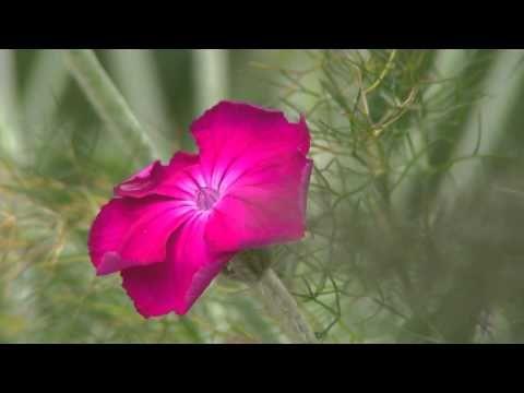 Normandie : Jardins du Pays d'Auge.  C'est un des jardins les plus beaux de France et est classé comme tel. Situé à coté de Cambremer, vous pourrez y accéder trés vite à partir du Domaine du Martinaa et ses Gites ... Allez laissez vous tenter et partez en Weekend en Normandie  ...  Bises du Martinaa  ... Kiss From Martinaa...  Valérie  ... www.martinaa.fr ...02 31 32 24 80