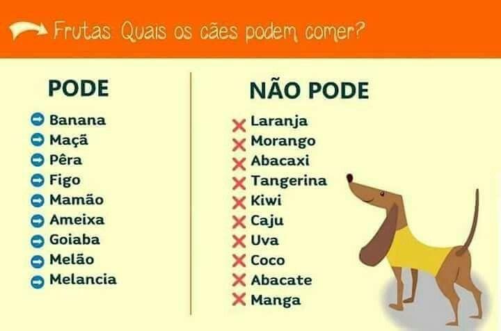 Meu cachorro Adora coco...