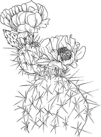 Opuntia Nopal Or Prickly Pear Coloring Page Cactus Drawing Cactus