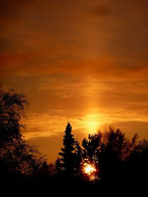 Portfolio Multimedeia: Sun arise - after 30 days of night
