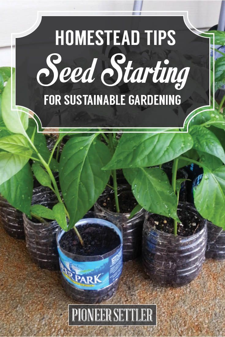 Homesteading Tips For Starting Seeds In DIY Greenhouse ...