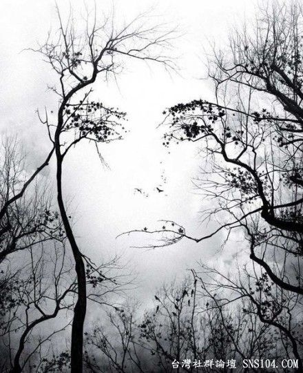 #ImaginationTrees Art, Optical Illusions, The Face, Trees Face, Female Face, Mothers Nature, Illusions Art, Opticalillusions, Nature Beautiful