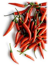 Cayenne pepper extracts are an important part of herbal treatment for muscle pain, fibromyalgia, arthritis, and the nerve pain caused by shingles and sciatica.101 It appears to act by decreasing the concentration of substance P, the primary chemical used by nerve cells to transmit pain signals.