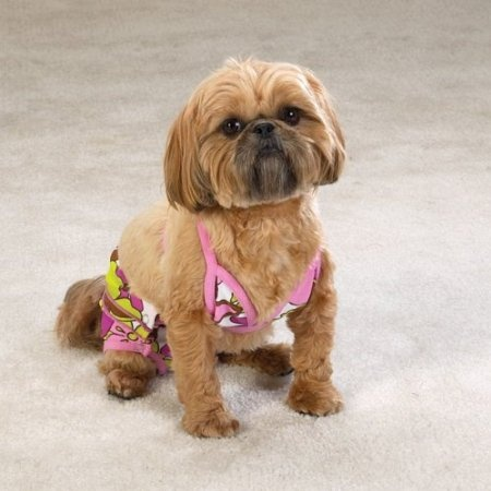 Amazon.com: Casual Canine Maui Flowers Tropical Dog Bathing Suit Bikini Small: Pet Supplies  On sale for only $5 4/24/13.  How cute is this??