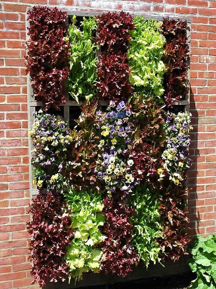 Risultati immagini per mini orto pet giardino for Giardino verticale balcone