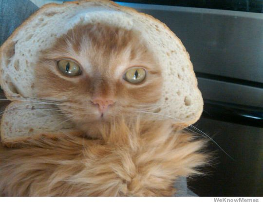 Cat In A Bread Box Simple 12 Best Bread Cats Images On Pinterest  Bread Breads And Sandwich Loaf Decorating Inspiration