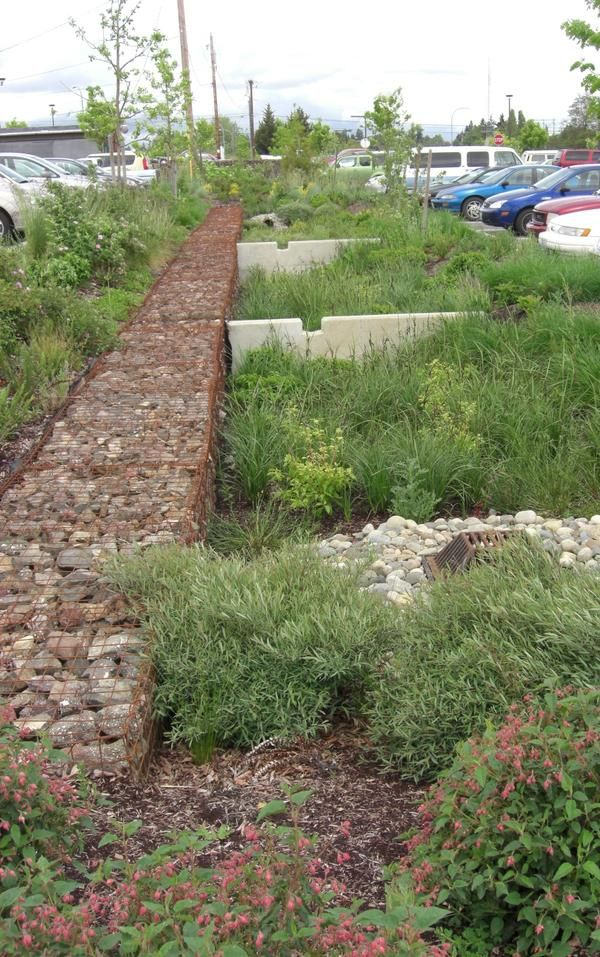 Beautiful stormwater management in the parking lot at Olympic College, Bremerton, WA by SvR Design. Click for link to full profile and visit the slowottawa.ca boards >> http://www.pinterest.com/slowottawa/