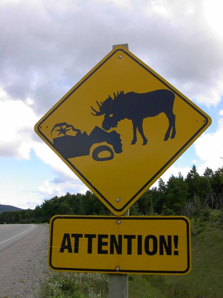 Newfoundland, Canada. These kind of signs are everywhere but we never seen one moose-bummer.