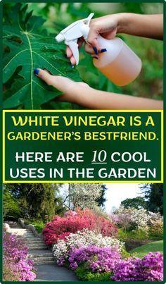 Weißer Essig ist der beste Freund eines Gärtners. Hier sind 10 coole Anwendungen im Garten