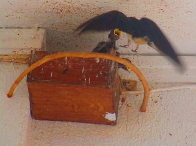 ATHENSLIGHT: Swallows feeding