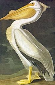 "J. J. Audubon's book ""Birds of America""  drawings of birds in North America.: Books Birds, Drawings Of Birds, Life S Drawings, Audubon Books"