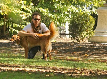 Ryan Reynolds from Celebrity Pets: Miley Cyrus' Puppy, Taylor Swift's Cat & More  What makes Ryan ever hotter? That fact that he adopted his adorable dog Baxter.