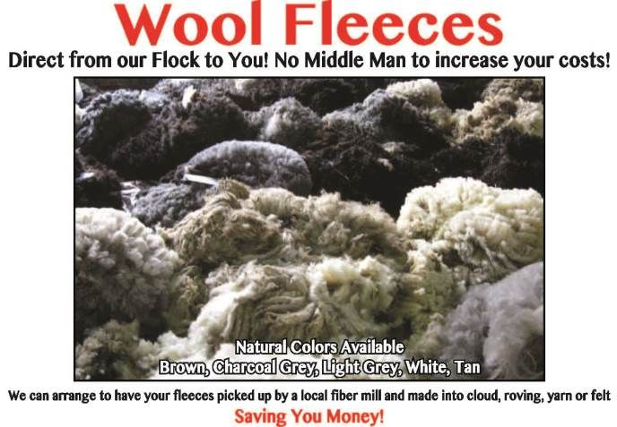 Prices are for the ENTIRE RAW Wool Fleeces ( Skirted but Not Washed ) sheared and then placed in storage bag. Prices listed are for a COMPLETE Raw Fleece – Weights will vary TO PURCHASE A FLE…