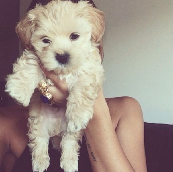Pin By Almara Shop On D O G S With Images Cute Animals Animals Puppies