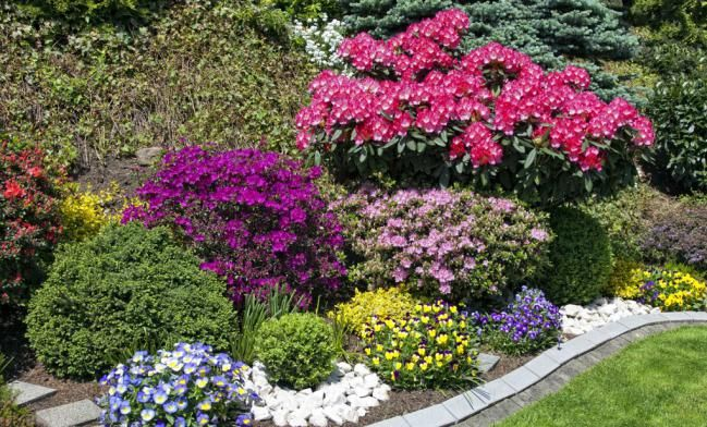 17 best images about plantitas on pinterest gardens - Plantas para jardin exterior ...