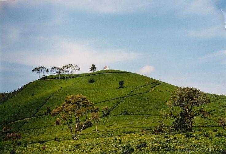 Perkebunan Teh Malabar - Malabar Tea Plantation