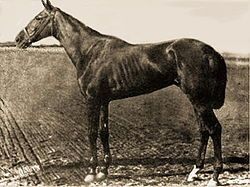 Hindoo | Winner of the 7th Kentucky Derby | 1881 | Jockey: Jim McLaughlin | 6-Horse Field | $4,010 prize