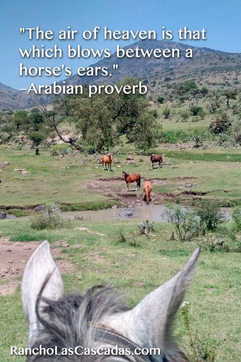 horse's ears, wild horses, horseback riding in mexico, pasture with horses, grey horse, mountain view