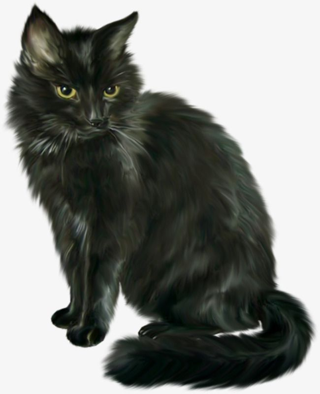 Black Cat Halloween Horror Cats Cats And Kittens Cute Cats