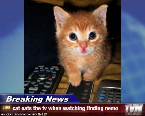 1000+ images about Tv cats on Pinterest | Cats, Animals ...