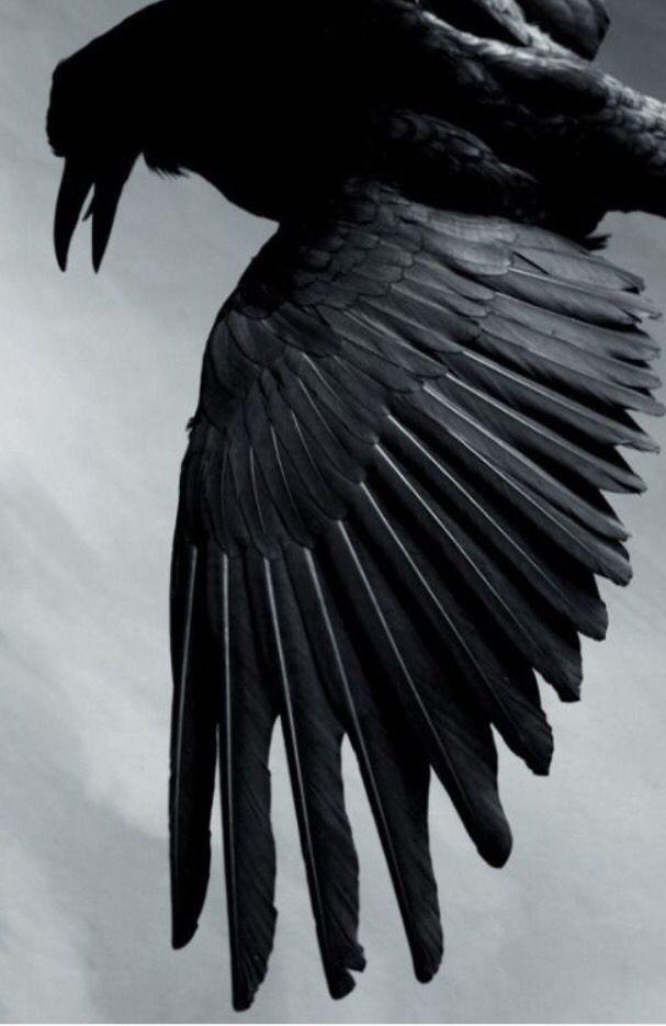 Corvid   Crow   Raven   La Corneille   Il Corvo   烏   El Cuervo   ворона   乌鸦  