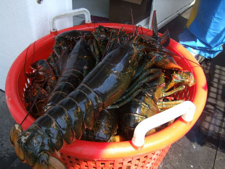 Lobstering is my job
