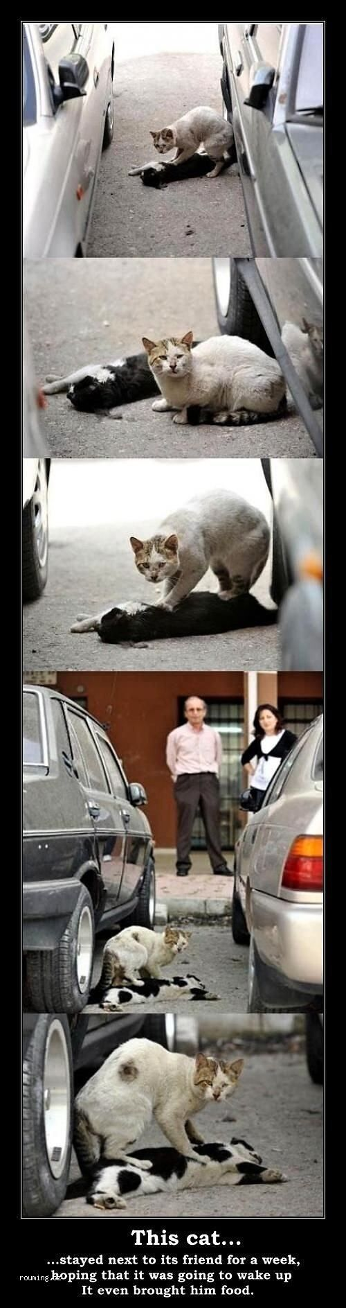 This makes me want to cry but it is SO sweet of the cat. Whoever thinks animals don't have souls are stupid!!