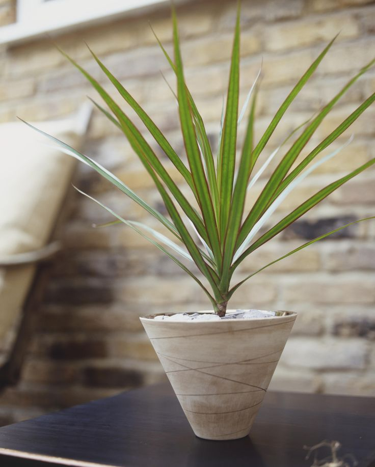 10 houseplants that can survive in even the darkest corner low light