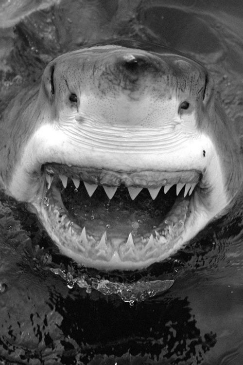what sharp teeth you have