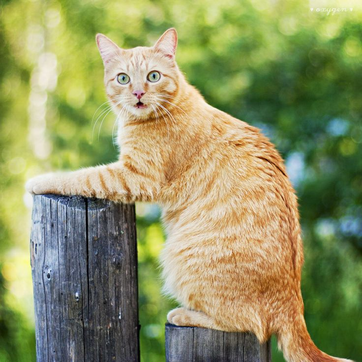 whaatt??Cats, Wild Animal, Kitty Cat, Funny Cats, Pole Sitting, Cat Meow, Crazy Cat, Pets Animal, Fence Post