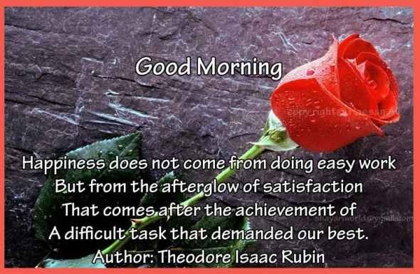 Good Morning Quotes Red Rose : A red rose for your pink morning good quotes
