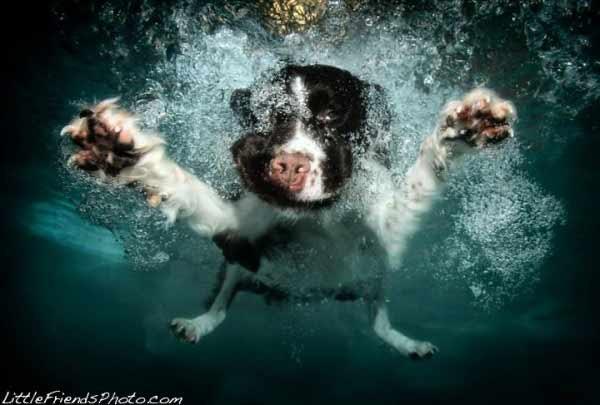 Cani subacquei :)